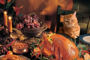 I am this cat. All the food is mine. Bahahaha!